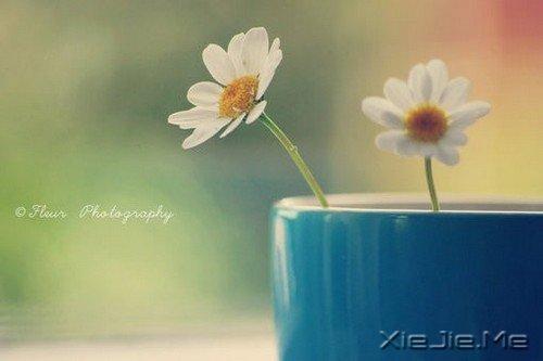 用一朵花开的时间